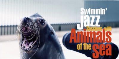 海の生き物たちが奏でる声や音だけでめちゃ踊れる!下関水族館・海響館CMが話題